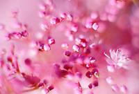 101225 Christmas Day Flora