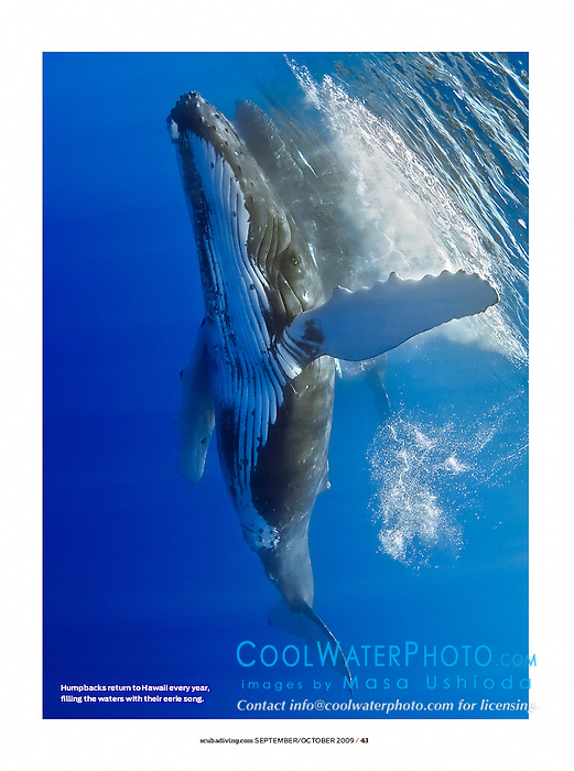 Scuba Diving Magazine, September/October 2009, full page, editorial use, USA, Image ID: Humpback-Whale-0027