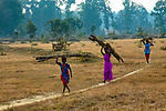 Wood collectors, Madhya Pradesh, India