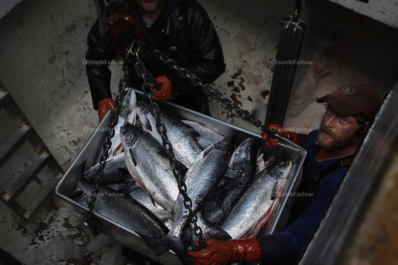Matt Peavy and a crew member unload their catch of Sockeye salmon in Craig.
