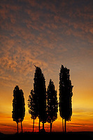 Cypress trees silhouetted agains sunrise sky, San Quirico d'Orcia, Tuscany, Italy
