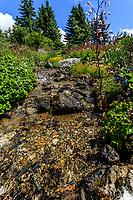 France, Hautes-Alpes (05), Villar-d'Arène, jardin alpin du Lautaret, ruisseau dans  la zone des plantes d'Amérique du Nord