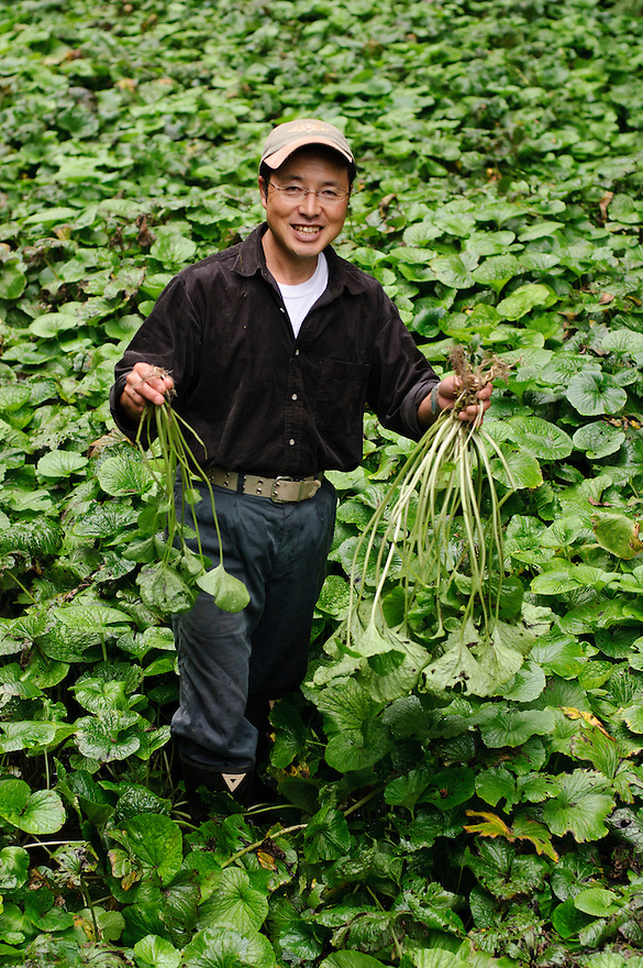 Marutou Wasabi CEO Tomoya Iida holding wasabi in his field, Shimoda, Japan, October 17, 2010.