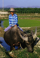 December 6th 1993-PHI LA, NORTHERN VIETNAM-A young boy rides a buffalo in rice paddies in Northern VietnamÕs Phi La.  Photo by Daniel J. Groshong/Tayo Photo Group