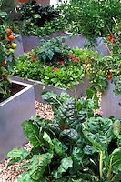 Galvanized metal raised vegetable garden in small space, with chards, spinach, tomatoes, and other vegetables in urban setting