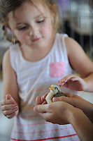 NWA Democrat-Gazette/ANDY SHUPE<br /> Abby Lewis, 3, of Fayetteville pets a chick Thursday, Sept. 3, 2015, during the Washington County Fair at the county fairgrounds in Fayetteville.