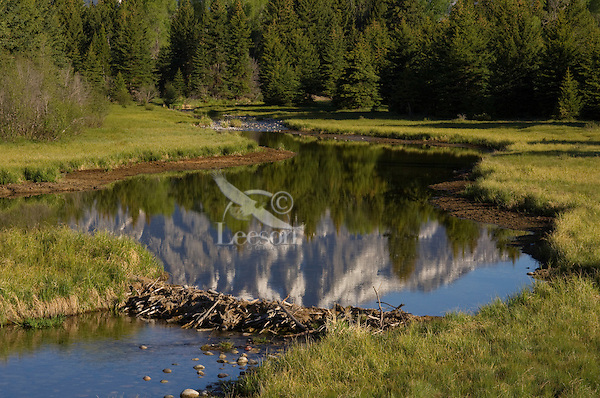 Beaver Pond near the Snake River in Grand Teton National Park, Wyoming.  Spring.