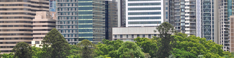 Part of the Brisbane CBD rises above the trees of the Brisbane Botanical Gardens.