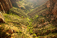 View of new growth trees and road at sunset from Canyon Overlook. Zion National Park, Utah