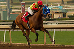 ARCADIA, CA  DECEMBER  30: #1 Silent Bird, ridden by Kent Desormeaux, in the stretch of the Midnight Lute Stakes (Grade lll) on December 30, 2017, at Santa Anita Park in Arcadia, CA.(Photo by Casey Phillips/ Eclipse Sportswire/ Getty Images)