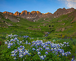 San Juan Mountains, CO<br /> American Basin with Colorado columbine (Aquilegia coerulea) and wildflower meadows beneath Handies Peak