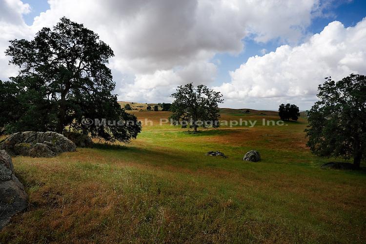 Oak and grass woodland   CALIFORNIA
