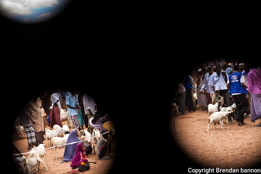 Commercial Destocking Exercise. Following a request by the Ministry of Livestock, IOM conducted a commercial destocking exercise on 1 October 2011 in the Kulan  host community, Lagdera District. In the exercise, IOM purchased 500 emaciated goats and sheep from host community families. The proceeds from the sales will meet their immediate, life‐saving needs and the meat will be used to supplement their diets.  It will also help to buy other healthy animals as soon as the drought is over since livestock productivity has continually declined due to poor and longer trekking distances triggered by depletion of water and pasture. October 2011. Kenya.