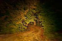 Remote unpaved country road through forest trees at night.