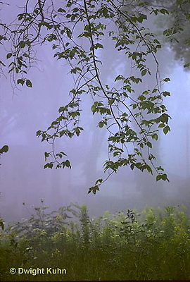 SR05-001z  Weather - foggy morning