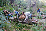 Earthwatch Team Transversing Tree With Traps