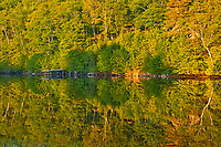 Dock and trees reflected in East River at sunset, Sheet Harbour, Nova Scotia, Canada