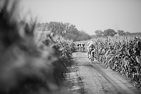 The infamous cornfield section; leaving no room for manoeuvring (by in-race) cars. <br /> And yes: this is officially a road race!<br /> <br /> 90th Schaal Sels 2015