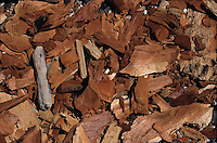 Chips of wood (close-up), Sulphur Bay, Tanna Island, Vanuatu