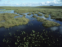 Flow Country (Moorland/Floating Bog) Scotland, UK