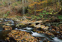 River in the Smoky Mountain National Park with fall colors
