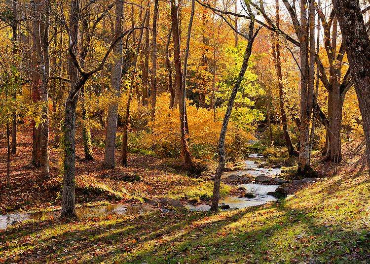 A stream runs through woods luminously backlit by the setting sun.  (At Abingdon Vineyard and Winery, near Abingdon Virginia)