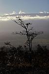 Lone tree silhoutte against Mauna Kea in Hawai'i Volcanoes National Park, Hawai'i, USA