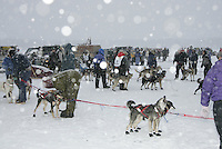 Jr. Iditarod Willow Lake  start / finish   holding area
