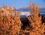 Mount Wrangell Wrangell-St. Elias NP  ALASKA