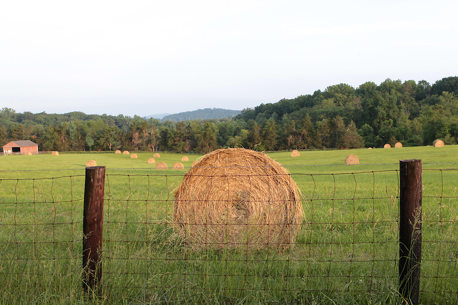 Hay bales on a farm land in Greene County, VA. Photo/Andrew Shurtleff