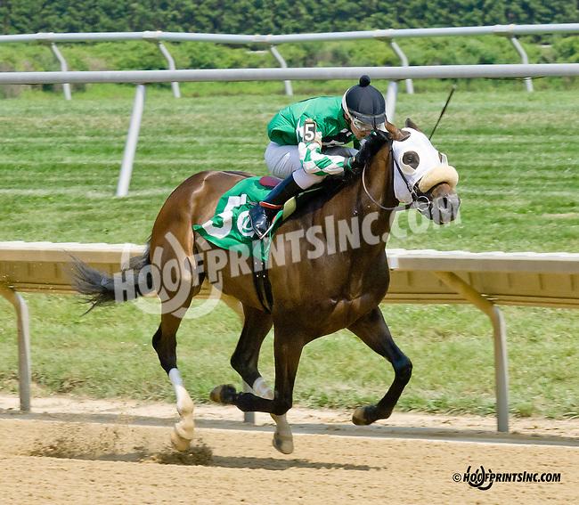 Tiz Showbiz winning at Delaware Park on 7/12/14