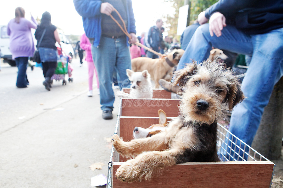 9/10/2010. Puppies for sale at the Ballinasloe Horse Fair, Ballinasloe, County Galway, Ireland. Picture James Horan
