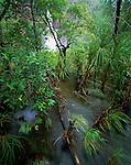 Australia, Northern Territory, Litchfield National Park, flooded forest at Wangi Falls, lush vegetation, in rainy season