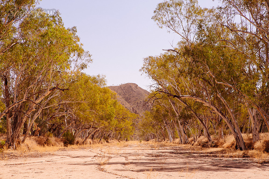 Image Ref: CA715<br />