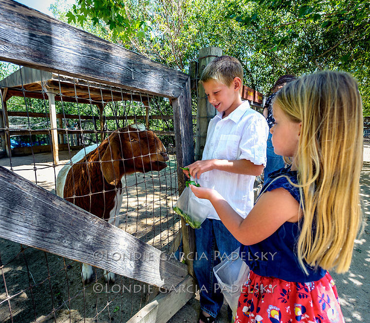 Kaeden and Ella feeding the goats at Avila Valley Barn farm stand and petting zoo, San Luis Obispo County, California