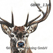 Simon, REALISTIC ANIMALS, REALISTISCHE TIERE, ANIMALES REALISTICOS, paintings+++++Card_OliviaH_Stag,GBWR134,#a#, EVERYDAY,deer
