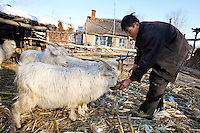A farmer feeds his rams in Yongfu, on February 28, 2006. Photo by Lucas Schifres/Pictobank