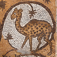 Medallion mosaic of camel-shaped giraffe, Byzantine church, Petra, Ma'an, Jordan. Petra church was rebuilt in 450 AD over Nabatean and Roman ruins and the mosaics date from the 6th century. This giraffe is from the Northern Aisle. Petra was the capital and royal city of the Nabateans, Arabic desert nomads. Picture by Manuel Cohen