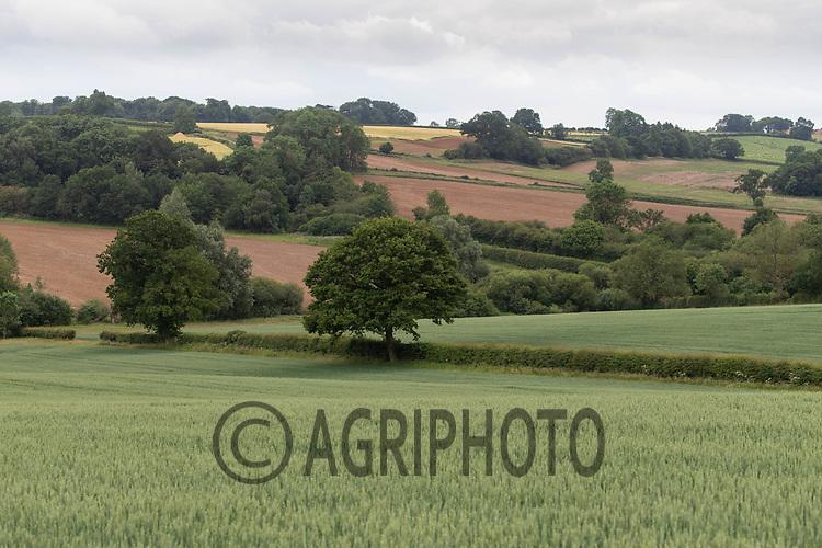 20.6.2020 Farming landscape <br /> ©Tim Scrivener Photographer 07850 303986<br />      ....Covering Agriculture In The UK.