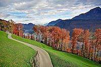 Rural road and autumn foliage along lake, near Lucerne, Switzerland