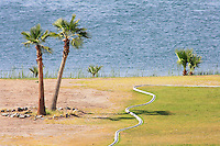 Palm trees along the shore of the Colorado River near Parker, Arizona.