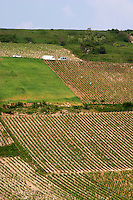 Vineyard. Monts Damnes. Domaine Henri Bourgeois, Chavignol, Sancerre, Loire, France