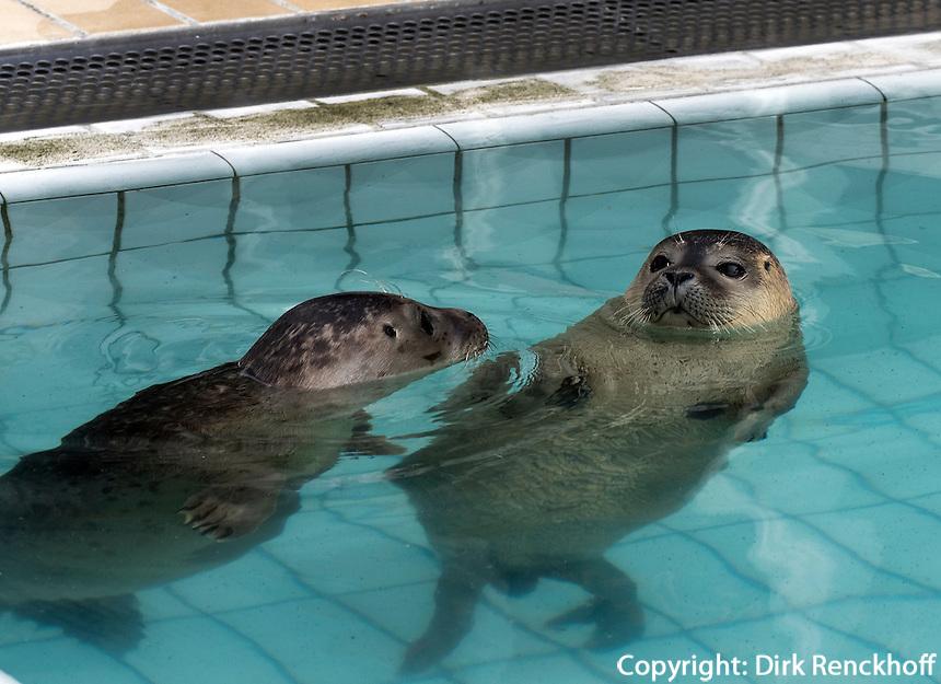 Im Seehund-Zentrum Pieterburen, Provinz Groningen, Niederlande