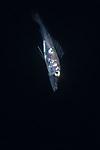 Snake Mackeral, Gempylus serpens, Black Water diving over Gulfstream Current; Florida Atlantic Diving; Plankton; SE Florida Atlantic Ocean off West  Palm Beach; larval fish; marine life; pelagic creatures; pelagic larval marine life; vertical migration marine creatures