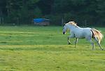upstate horses field