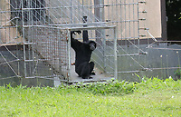 Affe kommt aus dem Tunnel zum Affenhaus - Jaderberg 21.07.2020: Tier- und Freizeitpark Jaderpark