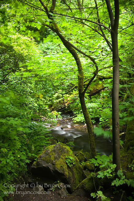 Stream below Latourell falls, Columbia River Gorge, Oregon