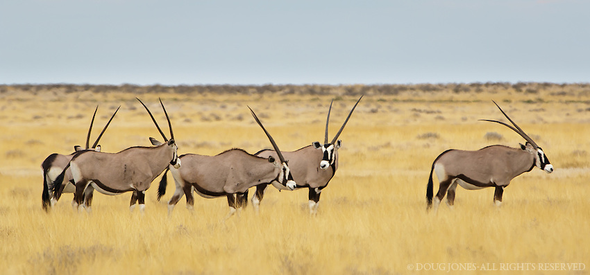 One of the most beautiful animals in Africa...