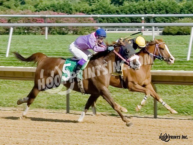 Tu For The Money winning at Delaware Park on 8/16/14