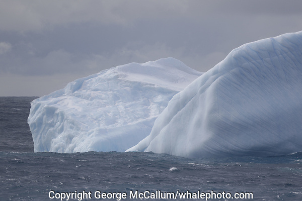 blue iceberg, south orkney islands, Scotia sea, Southern Ocean, Antarctica